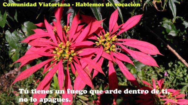 Vocaciones a la Comunidad Viatoriana